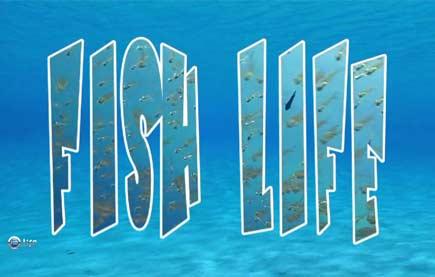 Смотреть шоу Жизнь под водой онлайн