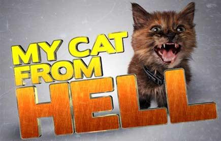 Смотреть шоу Адская кошка онлайн