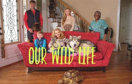 Смотреть шоу Наша дикая жизнь онлайн